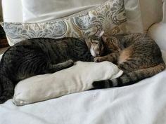 My cats cuddling with each other!!!! Soooo cute<333