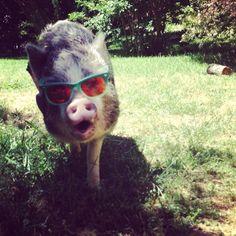 Porky the Pig!
