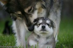 Motherhood.... What a Joy !