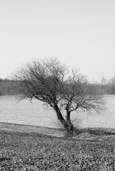 'Einsam' von Heidrun Lutz bei artflakes.com als Poster oder Kunstdruck $16.63