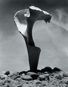 Shell by Andreas Feininger