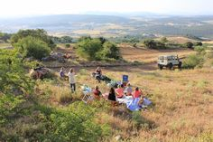 a mountain picnic with the horses