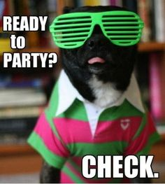 party - Funny pictures and memes of dogs doing and implying things. If you thought you couldn't possible love dogs anymore, this might prove you wrong. Funny Dogs, Funny Animals, Cute Animals, Animal Funnies, Party Animals, Hipster Dog, Funny Dog Pictures, Funny Photos, Funniest Pictures