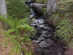 A natural brook running through the Dingle Park in Halifax Nova Scotia