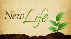 New Life - http://blog.peacebewithu.com/4735-2/