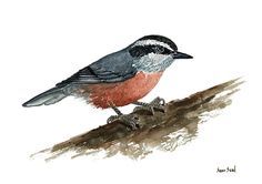 Love the little red breasted nuthatches
