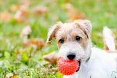 Giochi per cani fai da te: 10 idee per divertirvi con loro a costo zero