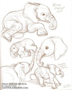 40 Free & Easy Animal Sketch Drawing Ideas & Inspiration - Elefanten - Home Easy Sketches, Art Drawings Sketches, Sketch Art, Animal Sketches Easy, Tattoo Sketches, Easy Animal Drawings, Sketch Ideas, Sketch Inspiration, Sketch Design