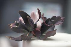 black orchid Black Orchid, Fondant, Orchids, Succulents, Plants, Succulent Plants, Plant, Gum Paste, Planets
