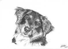 mon chien Ulysse avec son beau regard, au crayon graphite