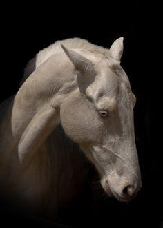 Лошади в кадре - фотографии - equestrian.ru