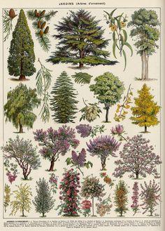 Toutes les tailles   arbres d'ornement-1   Flickr: partage de photos!