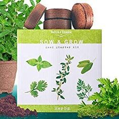 Nature's Blossom Herb Garden Seed Starter Kit. Grow 4 Herbs from Organic Seeds – Basil, Cilantro, Parsley, Thyme. A Complete Beginner Gardeners Gardening Set. Organic Horticulture, Organic Gardening, Flower Gardening, Vegetable Gardening, Unique Garden Gifts, Parsley Plant, Seed Starter Kit, Herb Garden Kit, Herbs Garden