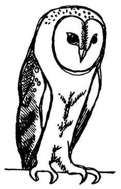 'The Perched Barn Owl' by Animal Dreaming