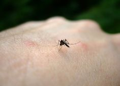 Bio Orbis: O Zika Vírus
