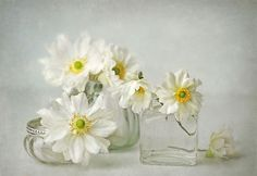 small delicate wonders by Lizzy  Pe  on 500px