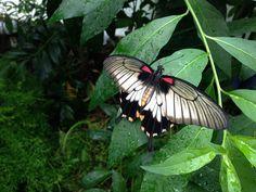 "@alvo_muses - ""The #SensationalButterflies exhibition @NHM_London is stunning!"""