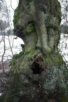 Tree got face
