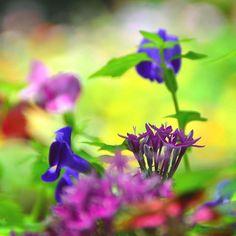 #flowerstalking#splendid_flowers#bns_flowers#instagardenlovers#flowerstarz#ig_flowers#lys_flowers#floral_secrets#florecitas_mx#quintaflower#heavenlyflowerz#venezuelagarden#ptk_flowers#topfleur#loves_blossom#123flowerscolors#flowersturk#loves_flowers_#ic_flowers#floralfix#great_captures_flowers#my_daily_flower#hdm_flowers#favv_flowers#a_t_awesome_t#u_got_framed#delightfulnature#igscflowers#9vaga_flowersart9#delightfulnature#world_mastershotz_nature by kiyoe_2012