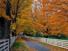 Drive thru New Hampshire/ NE to see the beautiful Fall colors. Beautiful World, Beautiful Places, Beautiful Pictures, Beautiful Roads, Nice Photos, Cover Photos, Fall Wallpaper, Nature Wallpaper, Leaves Wallpaper