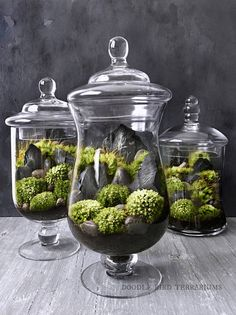 Set of Decorative Glass Apothecary Terrariums for Centerpiece