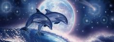 Moon Facebook Covers | Dolphins Night Moon Facebook Timeline Covers