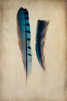 Feather photo nature photography tribal bird art by AmandaRaeK   Lovely Clusters - Beautiful Etsy Shops