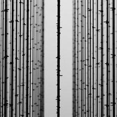 """""""<< forest >> artist Mona Hatoum #rsa_minimal #tv_simplicity #minimalmood #mafia_minimal #awesomeminimal #mindtheminimal #eraminimal #minimalism42…"""""""