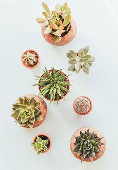 We Love Cacti