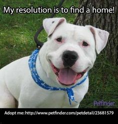 If you've resolved to help save pets, repinning Titian is an easy way to fulfill that!
