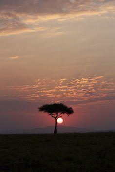 Maasai Mara, Kenya  I miss those trees. I want one in my front yard.