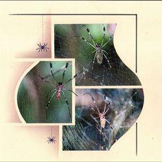 araignées.jpg