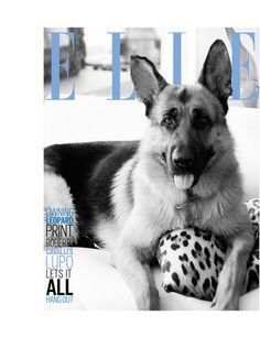 Doggy Style: Fashion pets in photos   ELLE UK Roberto Cavalli's German Shepard Lupo - shares a name with Kate and Will's spaniel.