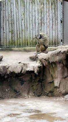 Seneca Park Zoo #zoo
