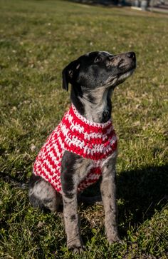 As a pet owner myself, I'm all about keeping your furry four-leggeds warm, fashionable and comfortable! This sweater is made of 100% acrylic yarn, made right here in the United States! (I'm a firm supporter of local economy.) Machine washable, however I do suggest laying out flat to dry to avoid...