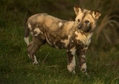 Spring baby boom for Yorkshire Wildlife Park | Discover Animals