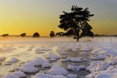 Winter landscape, Kalmthoutse Heide