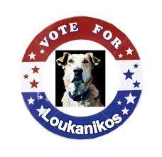 loukanikos - Google zoeken Convenience Store, Google, Dogs, Convinience Store, Pet Dogs, Doggies