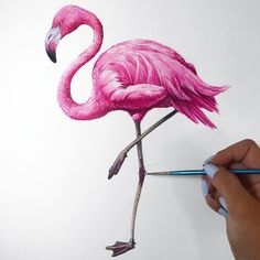 Elle Wills: Watercolor Illustration of a Flamingo