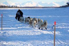 Dog Sledding: 2012 Iditarod