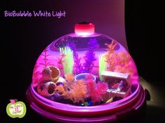 Class Pet: Glofish in a Bio Bubble!