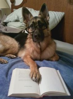 dogs read too