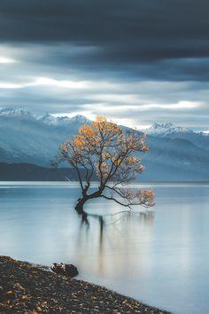 Life's Best. — captvinvanity:  Famous Tree | Photographer | CV