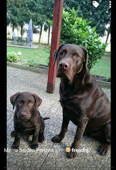 Hunde Foto: Manuela und Johnny und Walker - Meine beiden Prinzen Hier Dein Bild hochladen: http://ichliebehunde.com/hund-des-tages  #hund #hunde #hundebild #hundebilder #dog #dogs #dogfun  #dogpic #dogpictures