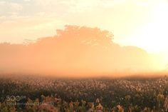 Akiyoshidai by ShinichiSaeki. Please Like http://fb.me/go4photos and Follow @go4fotos Thank You. :-)