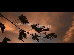 Sustainable Because  - New Zealand Wine HD
