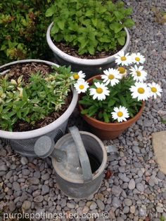 Vintage watering can and pots, top view, www.purplepottingshed.com