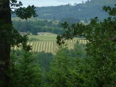 #Oregon #wine country in the #Willamette Valley