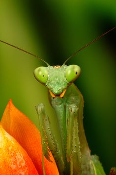 Follow our simple shooting tips and improve your macro photography!