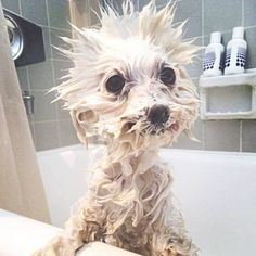 Pets_taking_baths~ Awww… Look at that face….